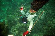 El archipiÈlago de Los Roques es un destino turÌstico del caribe que atrae igualmente cada seis meses a un grupo de pescadores durante la temporada de pesca de langostas, Una de las principales actividades econÛmicas del lugar.  De manera artesanal, los pescadores preparan sus herramientas nasas, guantes y m·scaras, para iniciar su labor en el mar. Los Roques, 2001 (RamÛn Lepage / Orinoquiaphoto)   The archipelago  of los Roques is a tourist destination in the Caribbean that also lures every six months a group of fishermen during the lobster fishing season..The fishermen prepare their tools, fishing nets, gloves and masks to begin their search under the water.  Los Roques, 2001 (RamÛn Lepage / Orinoquiaphoto)