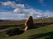 Tolpuddle Vineyard - huge piece of sandstone pulled out of the vineyard —