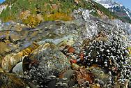 Ordesa National Park. Aragonese Pyrenees, Huesca, Aragon, Spain., Ara River . Bujaruelo Valley