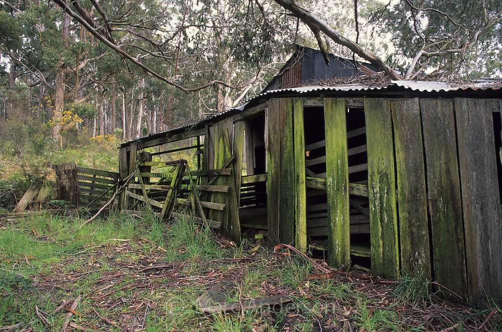 Old shearing shed, Bruny Island, Tasmania