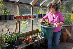 Tidying a greenhouse before winter