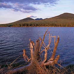 Eustis, ME. Driftwood and the peaks of Maine's Bigelow Preserve.  Dead River.  Spring. Northern Forest.
