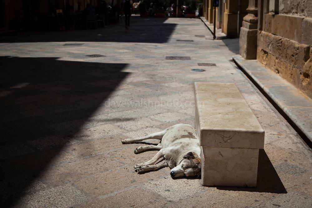 Street dog dozes in the afternoon sun, Trapani, Sicily, Italy. (c) 2013 davewalshphoto.com