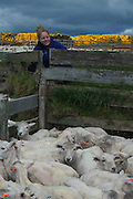 Renee in Sheep pen with sheep that have been shorn. (Clippies)<br /> Port Howard. Northern end of West Falkland. FALKLAND ISLANDS.<br /> This is the largest privately owned farm in the Falkland Islands with an area of 200,000 acres and over 40,000 sheep. The farm is owned by the Myles brothers and the settlement houses six shepherds and their families along with some retired farm workers.