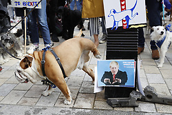"""© Licensed to London News Pictures. 07/10/2018. London, UK. A Pro-Remain dog takes a wee on a post with a photo of Boris Johnson as dog owners march on parliament to demand a """"People's Vote"""" on the final Brexit agreement. Photo credit: Peter Macdiarmid/LNP"""