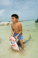The son of a shark fisherman proudly holds up a Dead Tiger Shark (Galeocerdo cuvier). Holbox Island, Mexico.
