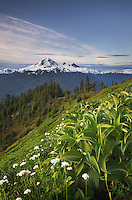 Mount Baker seen from meadow slopes of Church Mountain, Mount Baker Wilderness North Cascades Washington