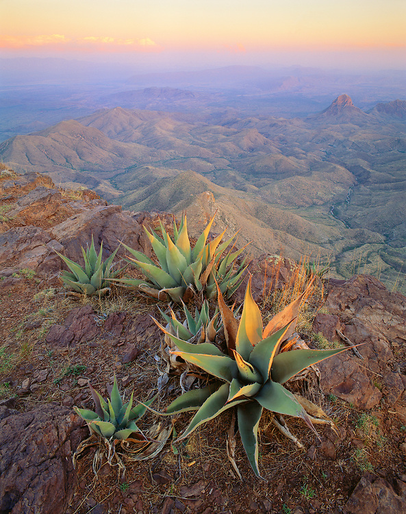0501-1001LVT ~ Copyright: George H. H. Huey ~ Agaves on the South Rim of the Chisos Mountains, with the Sierra Quemada below, and the Rio Grande and Mexico in the distance. Big Bend National Park, Texas.