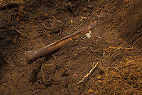 A femur juts from the dirt as FAFG staff and IFIFT students work to exhume the remains of an Ixil man killed by government security forces. After digging to locate the remains and the first positive  discovery is made a more careful approach is taken and anthropolgists begin the refined process of removing the final blanket of soil.