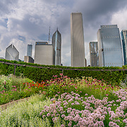 Lurie Garden in Millennium Park, Chicago. Photo by Alabastro Photography.