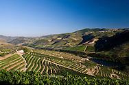 Symington Family Estates - Quinta dos Malvedos vineyards