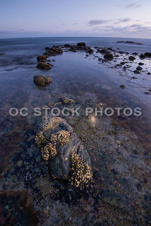Tide Pools at Crescent Bay Laguna Beach