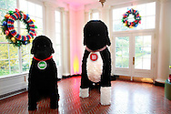 Bo and Sunny are part of the Christmas decorations at the White House  in December 2016<br /> <br /> Photo by Dennis Brack
