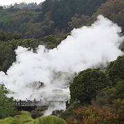 A spectacular geyser at Te Puia, Rotorua. Te Puia is the premier Maori cultural centre in New Zealand - a place of gushing waters, steaming vents, boiling mud pools and spectacular geysers. Te Puia also hosts National Carving and Weaving Schools and  daily maori culture performances including dancing and singing. Rotorua, 8th December 2010 New Zealand.  Photo Tim Clayton.