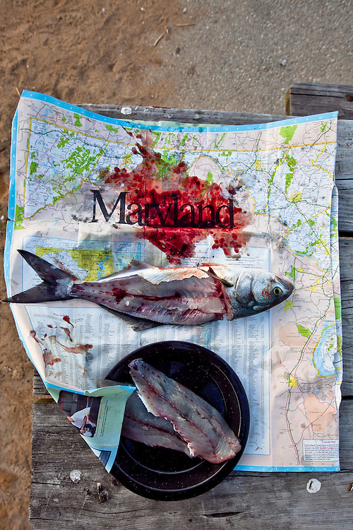 Blue Fish, Fillets,  and Maryland State Map