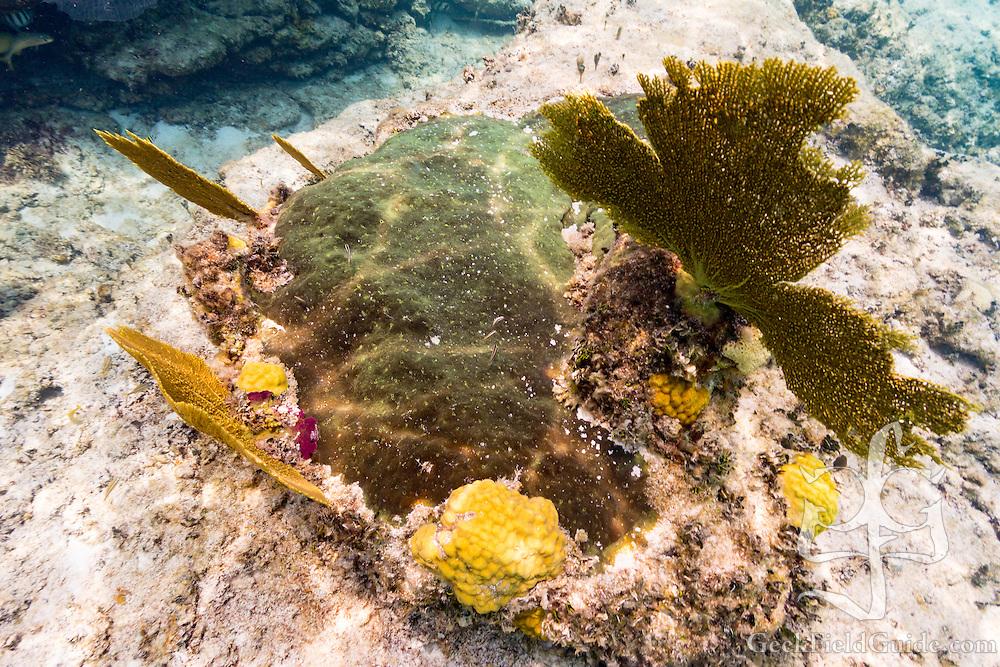 Fans, corals, and sponge