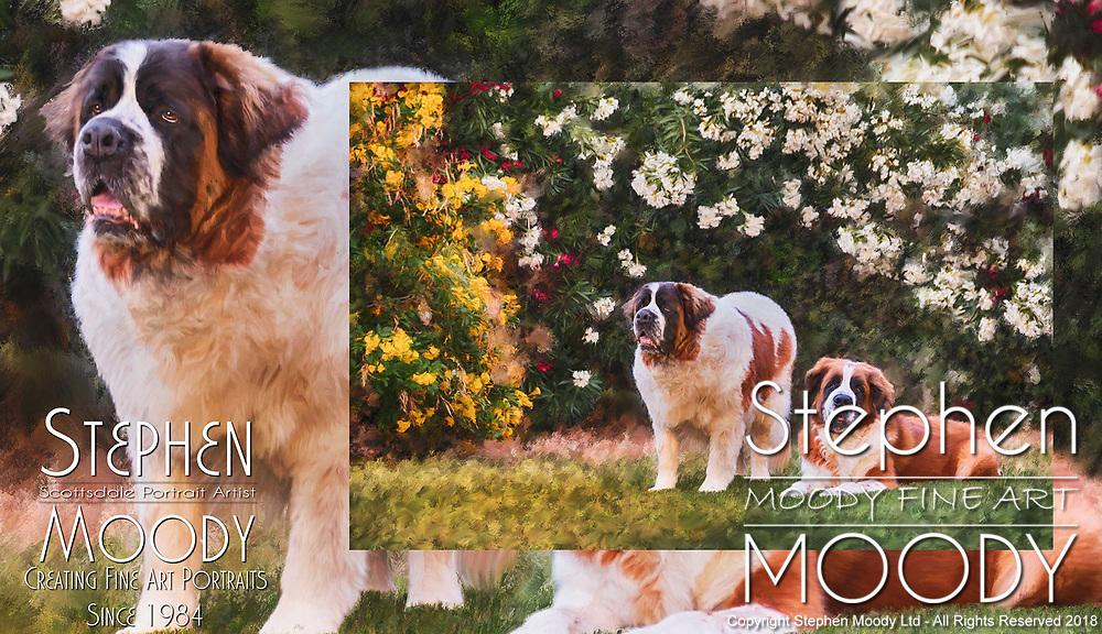Saint Bernard Fine Art Pet Portraits by Stephen Moody - Scottsdale Portrait Artist and Master Photographer, Scottsdale, AZ