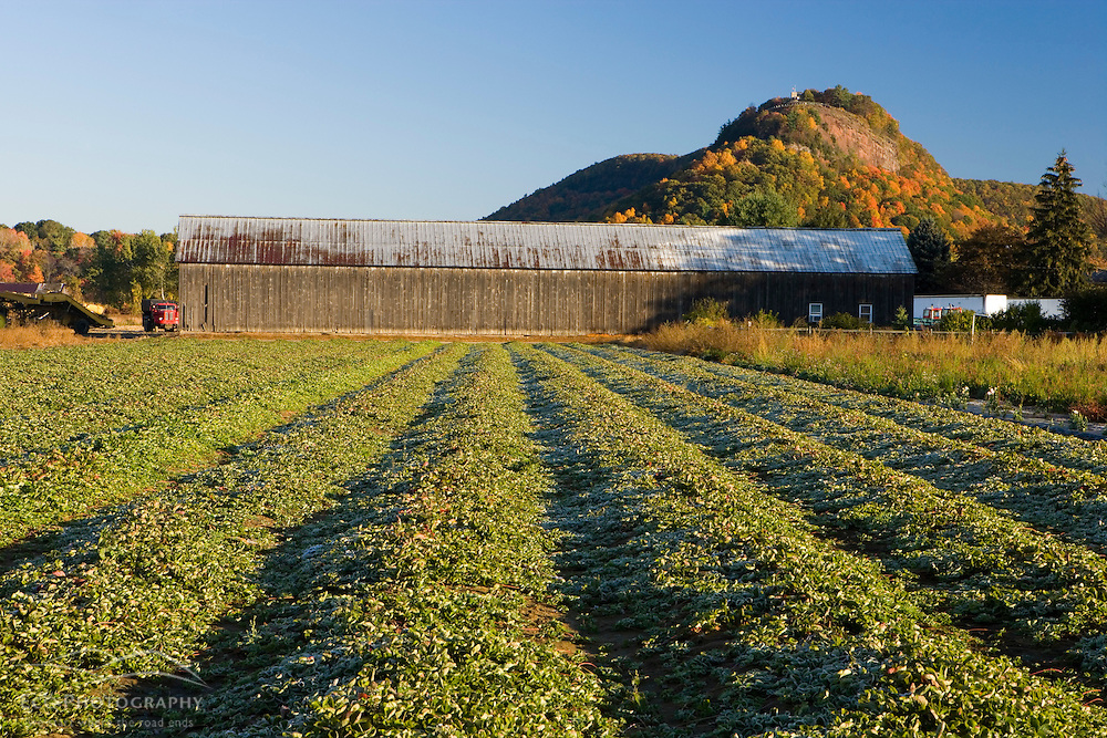 Strawberry field, Tobacco barn, and Sugarloaf Mountain.  Whatley, Massachusetts.