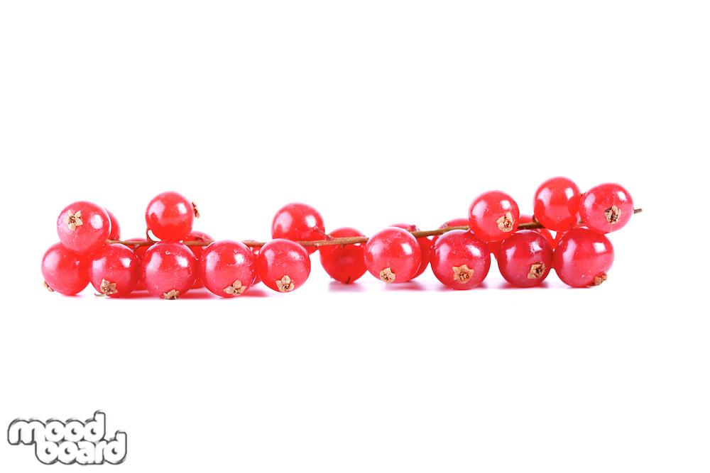 Studio soht of redcurrants - close-up