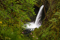 Looking up through the gorge towards Metlako Falls in the Columbia River Gorge of Oregon.