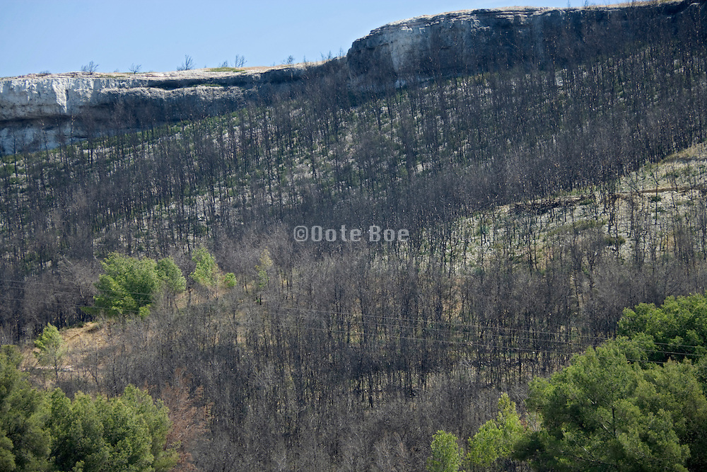burned forest on a hill side