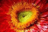 Flower Extrusion