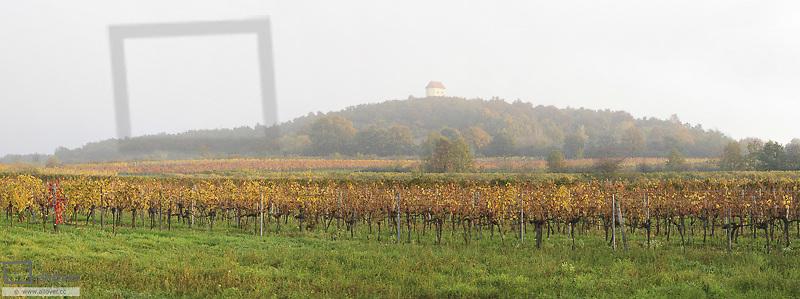 Vine yard, Austria, Burgenland, Northern Burgenland