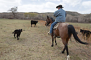 CREDIT: Steven St. John for The Wall Street Journal<br /> &quot;ANIMAS&quot;<br /> <br /> Rancher Lin Blancett, whose cows had to be evacuated because of the Gold King Mine spill, rides threw his heard checking on new born caves on Tuesday, March 22, 2016