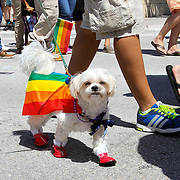 Florida_Gay_Pride_Parade