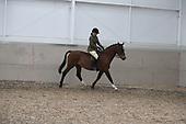 17 - Class 16 - Ridden Veteran Horse & Pony 15yrs & Over