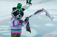 KELOWNA, CANADA - MARCH 18:  Rocky Raccoon, the mascot of the Kelowna Rockets, stands on the ice on St. Patrick's day against the Vancouver Giants on March 1, 2018 at Prospera Place in Kelowna, British Columbia, Canada.  (Photo by Marissa Baecker/Shoot the Breeze)  *** Local Caption ***