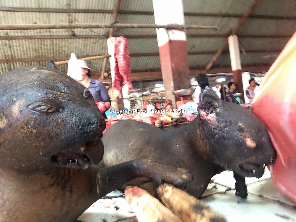 Knocked out with a club and blowtorched ALIVE: How 'hundreds of thousands' of dogs and cats are being cruelly slaughtered for meat in Indonesian markets<br /> <br /> The overpowering stench of charred skin wafts through the 'meat section' of Tomohon market, on the Indonesian island of Sulawesi.<br /> As flies buzz around the carcasses of dogs, cats, pigs and snakes which are strewn across the blood-stained floor, two teenage girls pick out the dog they want for dinner.<br /> The emaciated dogs cower from the lasso of a slaughterhouse worker who reaches into the metal cage they have been trapped in for days - without food or water.<br /> Their eyes widen with fear as he yanks another pup out by its neck and clubs it over the head until it lies motionless on the ground.<br /> The dog looks dead but dreadful footage, shot only this week, shows the animal frantically kicking out as the market worker fires up a blowtorch and burns it to death.<br /> This dog was among the 'hundreds of thousands' of strays and pets which are inhumanely slaughtered every year to supply Indonesia's dog meat trade, animal protection groups claim.<br /> <br /> <br /> The heartbreaking video, and equally disturbing photographs, were taken by RupertImhoff, a research officer at the Bob Irwin Wildlife and Conservation Foundation, who flew to northern Sulawesi after he heard that dogs were being beaten and burned to death.<br /> He saw other domestic animals such as cats and rabbits - as well as wild bats, jungle rats, pigs and snakes - suffering the same gruesome fate.<br /> MailOnline has even seen disturbing footage which shows market workers cutting open a cat which had two unborn kittens inside.<br /> Many of the dogs who end up in slaughterhouses are strays and pets. Dog snatchers on motorbikes lasso them around the neck and speed off, animal rights groups have claimed.<br /> Some dogs are captured while their owners are walking them, and a rare few are bought from poor villagers for 'a few