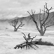 Dead Ghost Trees - Mammoth Terrace Hot Springs - Yellowstone National Park - Infrared Black & White
