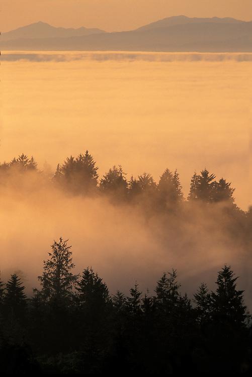 USA, Washington, Neah Bay, Setting sun lights fog rolling through temperate rainforest near Cape Flattery on summer evening