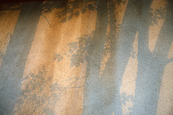 Shadows of tree trunks and leaves on a wall during a sunset