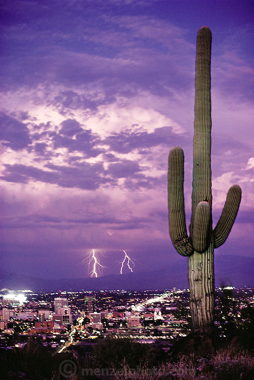Summer lightning storm over Tucson, Arizona from Tumamoc Hill with Saguaro cactus. Storms erupt regularly during Arizona summers due to the moist air that flows in from the Gulf of California then collides with nearby mountains and is forced upward, where it condenses into thunderclouds.
