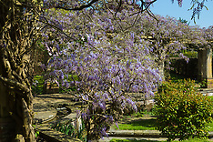 2018-05-04 - SWNS - WISTERIA - StokePoges