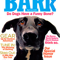 The Bark cover Summer