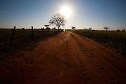 Uniao de Minas_MG, Brasil...Estrada de terra em Uniao de Minas, Minas Gerais...The dirt road in Uniao de Minas, Minas Gerais...Foto: LEO DRUMOND / NITRO