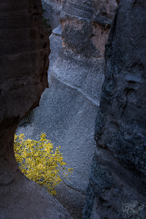 Walking through the maze of volcanic tuff, the ashy material reflecting the blue sky in the shadows of the afternoon sun. A burst of color caught my eye as I rounded a corner. Peeking through the canyon walls, the leaves of the tree radiated a golden yellow which contrasted brilliantly against the blue stone.
