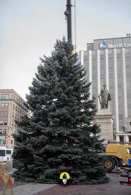 Portland Christmas Tree.Christmas Tree Cut From Cash Corner So Portland For