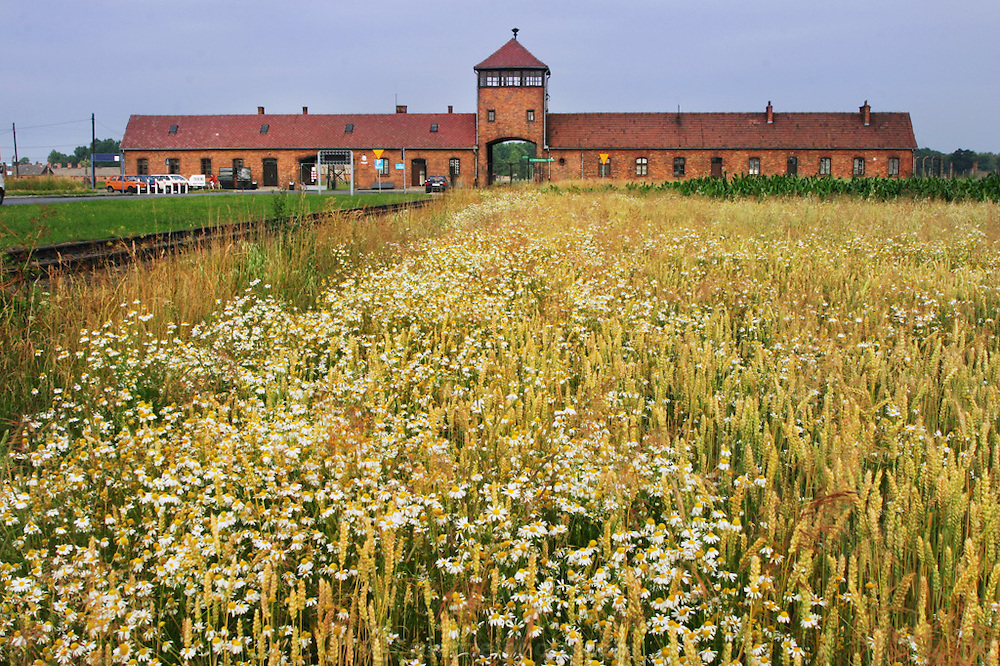 Birkenau Death Camp, Poland, summer wheat and flowers.