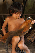 Huaorani Indian child holding hunted Dusky Titi Monkey (Callicebus moloch). Gabaro Community. Yasuni National Park.<br /> Amazon rainforest, ECUADOR.  South America<br /> The children often inspect and play with the hunted animals brought into the community.<br /> This Indian tribe were basically uncontacted until 1956 when missionaries from the Summer Institute of Linguistics made contact with them. However there are still some groups from the tribe that remain uncontacted.  They are known as the Tagaeri. Traditionally these Indians were very hostile and killed many people who tried to enter into their territory. Their territory is in the Yasuni National Park which is now also being exploited for oil.