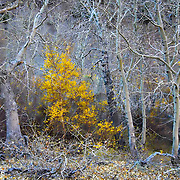 Fall, Eastern Sierra