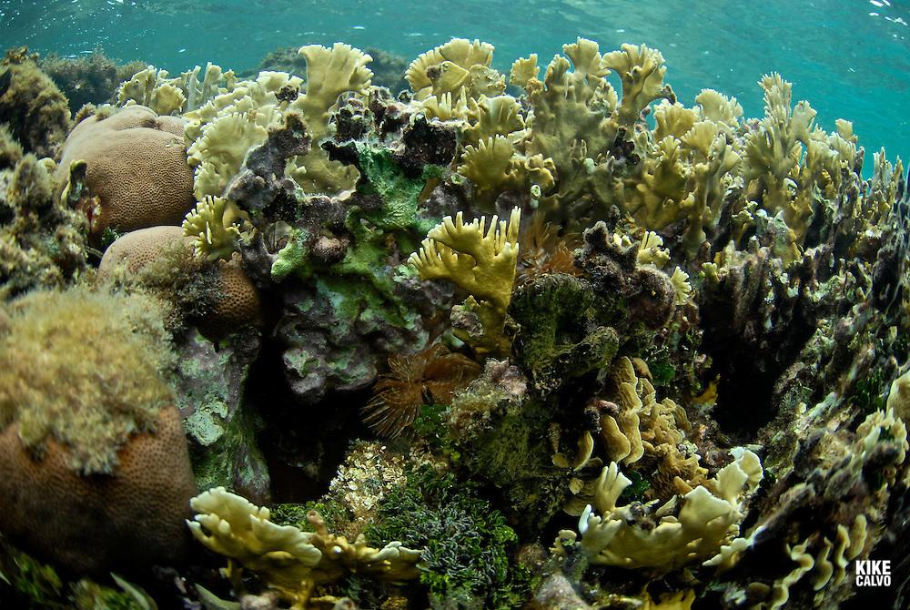 Underwater view of a healthy Caribbean Reef
