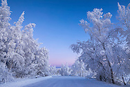 Hoarfrost covers trees along Clunie Lake in Southcentral Alaska. Winter. Morning.
