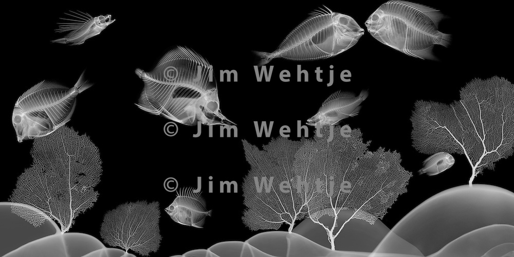 X-ray image of a sea scene (white on black) by Jim Wehtje, specialist in x-ray art and design images.