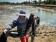 01 MARCH 2016 - CHACHOENGSAO, THAILAND: Workers pull a net of a pond on a shrimp farm in Chachoengso province of Thailand. Thailand is one of the leading shrimp exporters in the world and aquaculture is an important component of the Thai export economy. Thai government officials have warned that there may not be enough water in the country's reservoirs to provide adequate water for farming, including fish and shrimp farms, industrial needs and domestic consumption. The government has told rice and fish farmers to reduce their use of water, and if necessary to reduce their crops. The current El Niño weather pattern is being blamed for the drought. The 2015 rainy season was well below normal and the 2016 rainy season could start two months late.   PHOTO BY JACK KURTZ