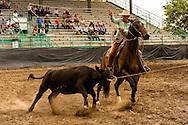 Buck Brannaman, healer, Big Loop, Will James Roundup, Ranch Rodeo, Hardin, Montana