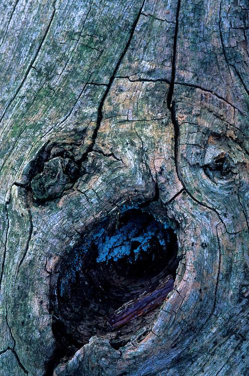 France, noeud de bois de châtaigner